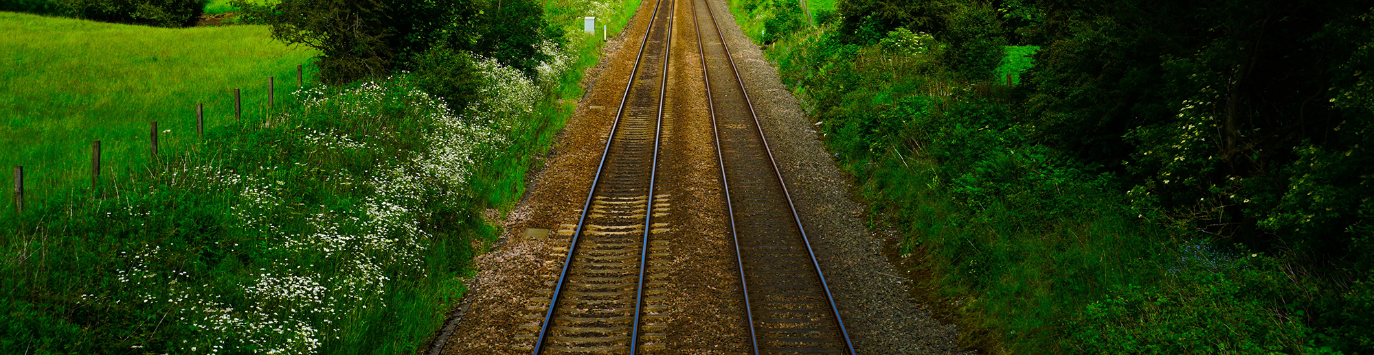 Järnvägsspår i grönska